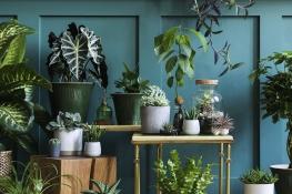 plantes vertes dinterieur limmo neuf grenoble